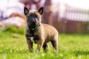 puppy-1726414_640